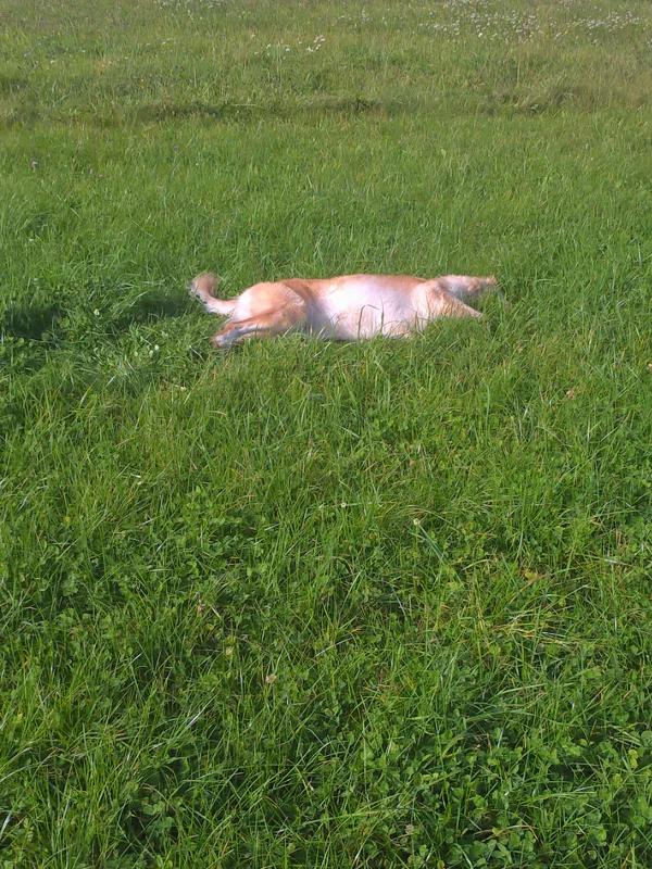 .... was einfach nur toll in diesem Gras ist! :)